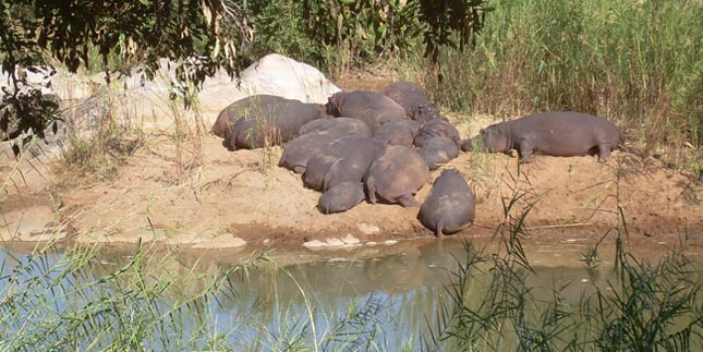 Contact Hippo Pools